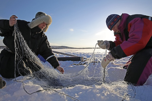 Skolt Sámi fishermen Jouko Moshnikoff and Teijo Feodoroff at winter nets in Spring 2014. Photo: Gleb Raygorodetsky, 2015.