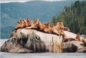 merileijonat