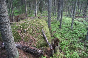 Old growth forests of the programme in Finland