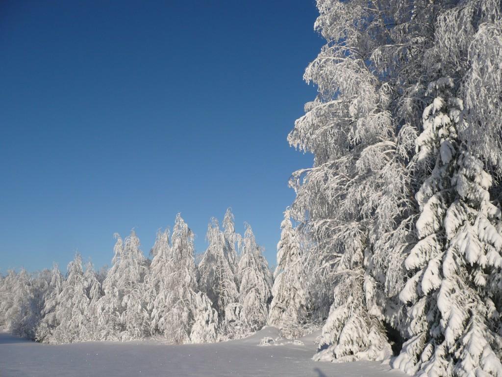 Havukkavaara in January