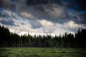 finland-marshmire