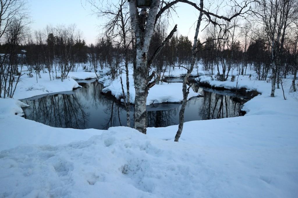 May in Sámi taiga, 2017.