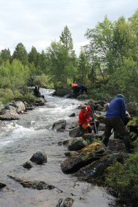 Work team restoring habitat on Kirakkakoski.