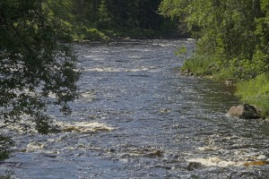River Koitajoki. Photo: Eero Murtomäki