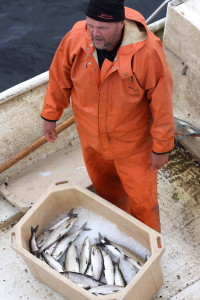 Mats Innala with whitefish