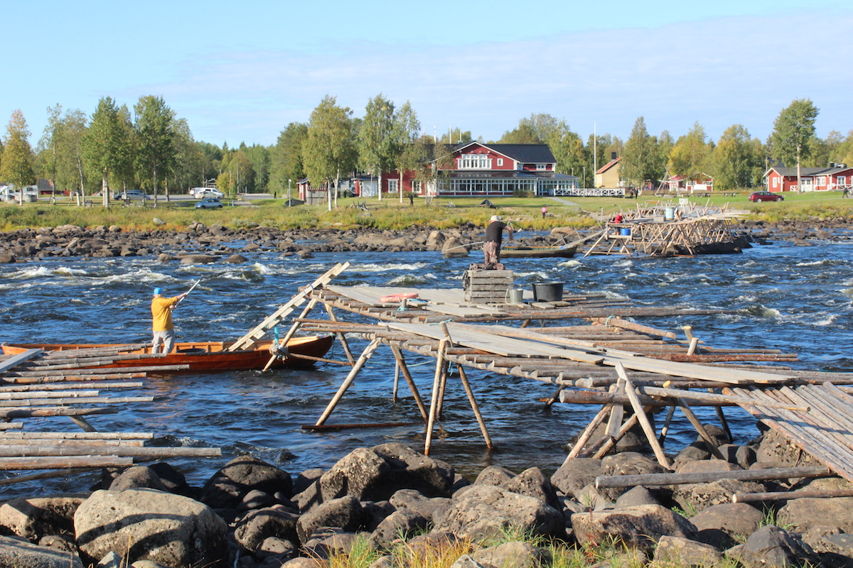 Whitefish ladders on Kukkolankoski. Hannibal Rhoades