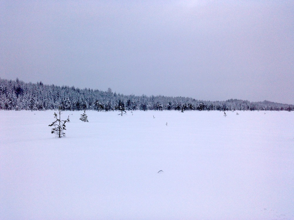 One of the surveyed, marshmire restoration sites in Eastern Finland, January 2019.