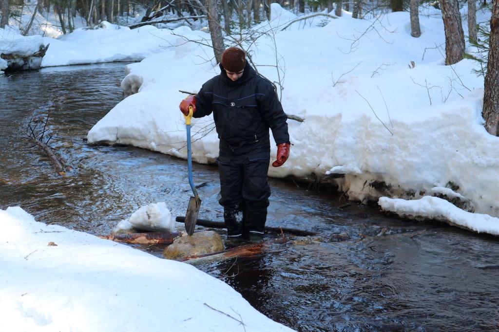 Specialist Lauri Hämäläinen works on the trout spawning gravel in Jukajoki river.