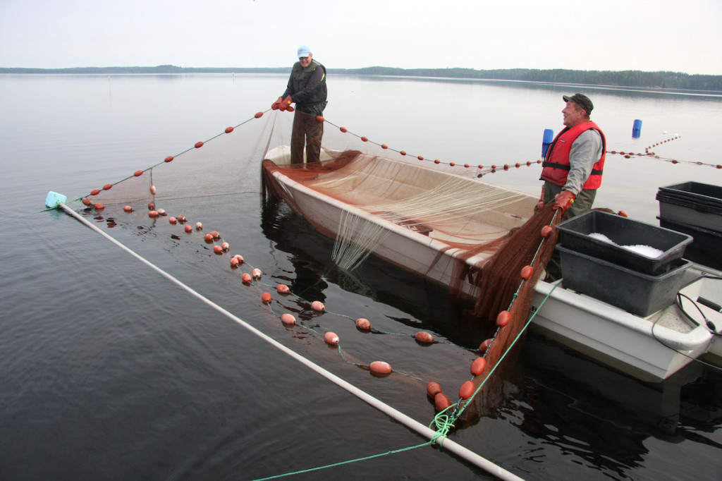 Asko and Markku on fish traps, June 2019