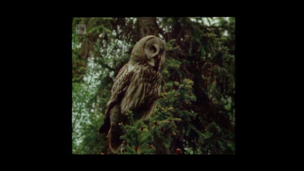 9_Owl film