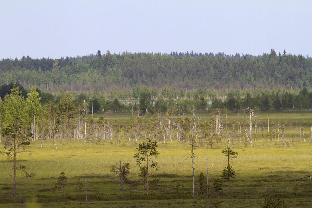 Kesonsuo, a fully intact marshmire in the Koitajoki catchment area.