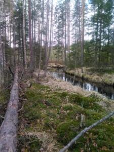 Kissapuro stream, North Karelia.