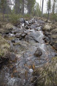 The new Samirs rewilding sites contain streams, lakes and marsh mires. Snowchange, 2020