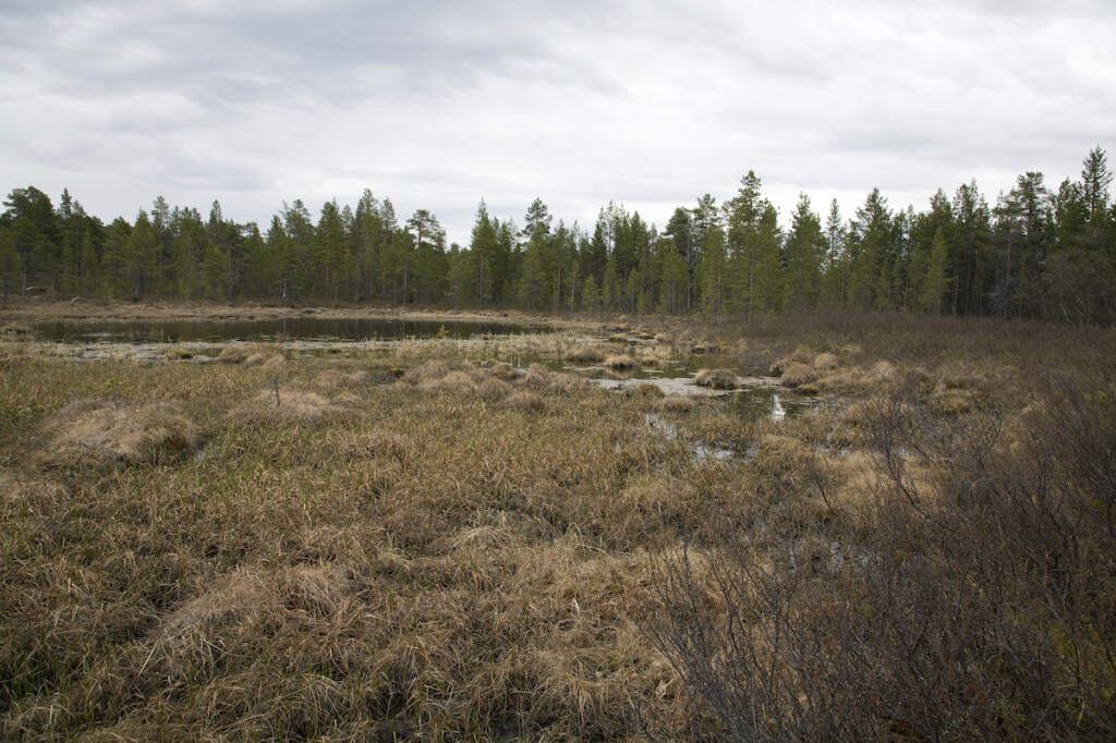 Marshmires are key carbon sinks in the high Arctic. Snowchange 2020