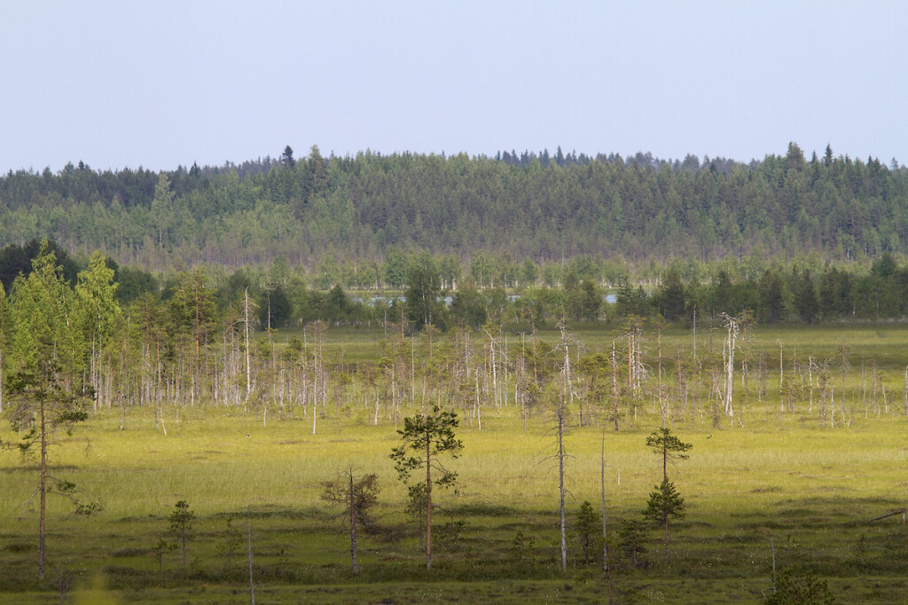 Kesonsuo marshmire is a diamond in the Koitajoki system. Photo: Eero Murtomäki, Snowchange