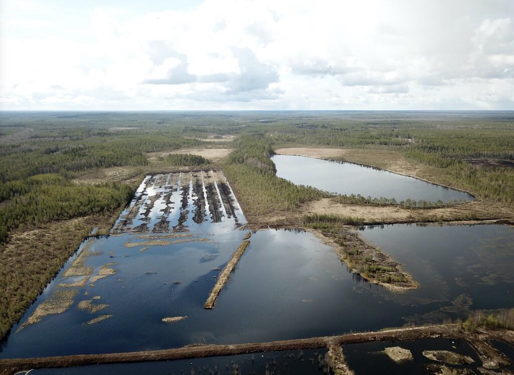 Salojenneva wetland, 2020.